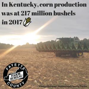 KY Corn